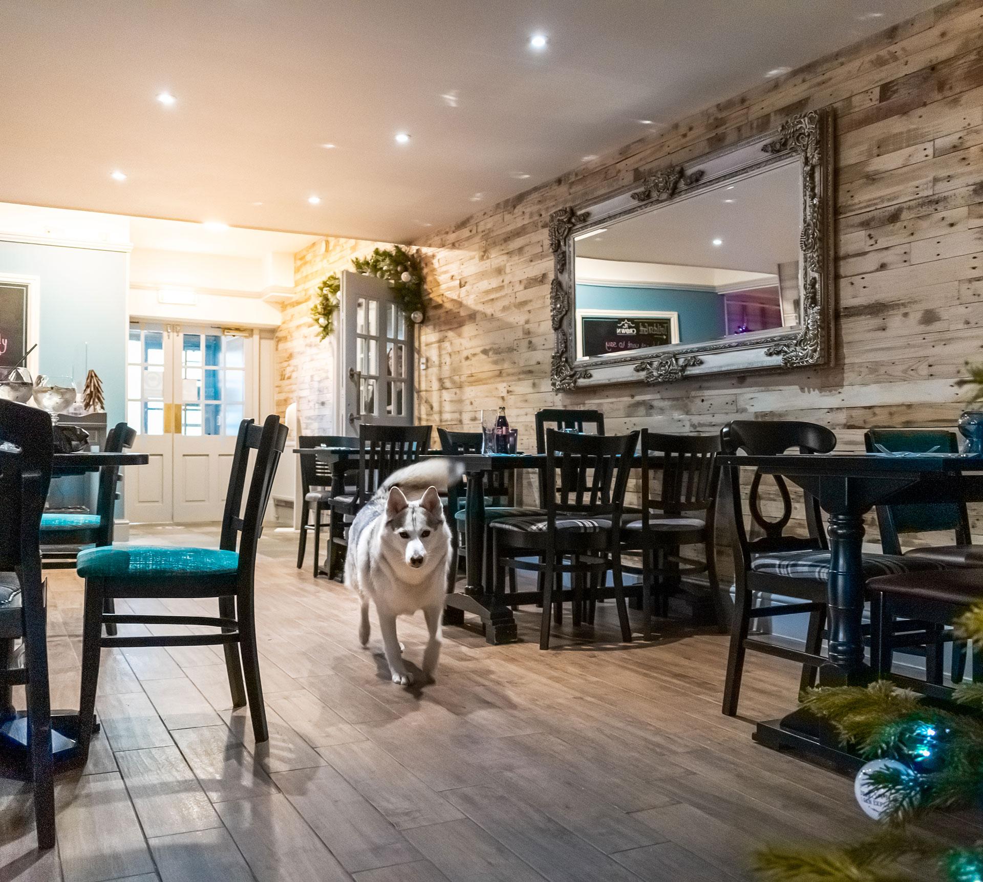Silvie Dog Friendly Pub